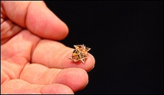 Origami Robot Folds Itself Up, Does Cool Stuff, Dissolves Into Nothing