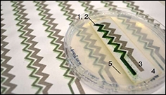 Digitally printed cyanobacteria can power small electronic devices