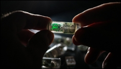 "Ingestible ""bacteria on a chip"" could help diagnose disease"