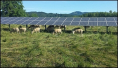 Installing solar panels on agricultural lands maximizes their efficiency